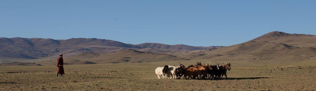 Пустыня Гоби-2009, соло Игоря Политико